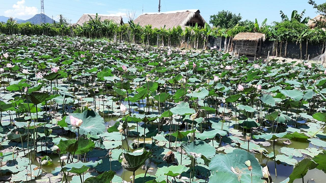 Đến du lịch Nha Trang, nhất định phải ghé Nha Trang xưa