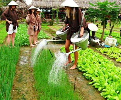 Kinh nghiệm khám phá làng rau Trà Quế, Hội An 2019
